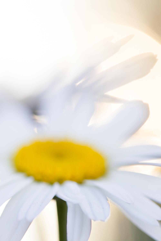 July-Blog-Macro-Photography-Flowers-Ann-Arbor-Jaymes-Dempsey-5.JPG