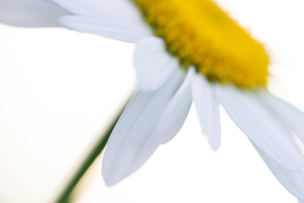 July-Blog-Macro-Photography-Flowers-Ann-Arbor-Jaymes-Dempsey-6.JPG