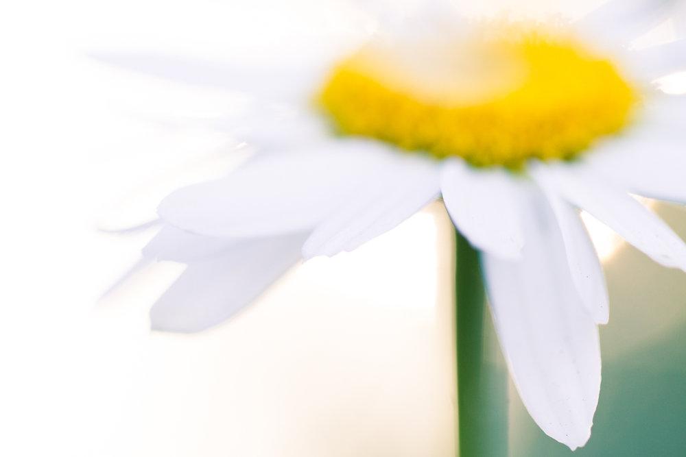 July-Blog-Macro-Photography-Flowers-Ann-Arbor-Jaymes-Dempsey-8.JPG