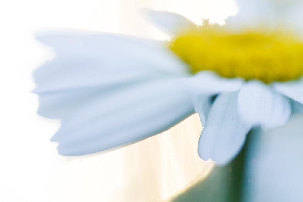 July-Blog-Macro-Photography-Flowers-Ann-Arbor-Jaymes-Dempsey-7.JPG