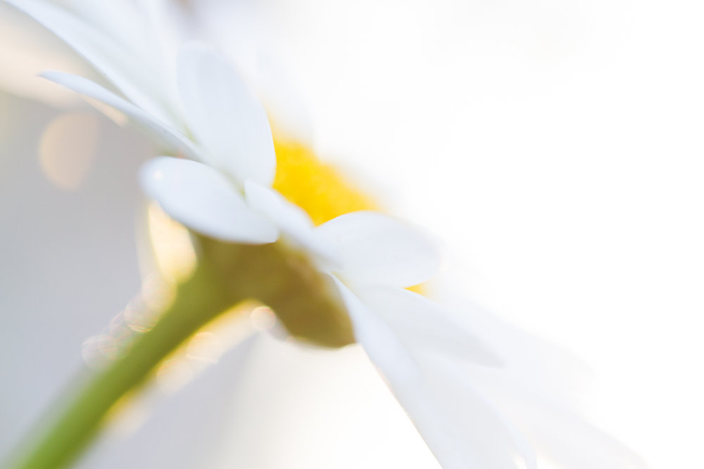 July-Blog-Macro-Photography-Flowers-Ann-Arbor-Jaymes-Dempsey-10.JPG