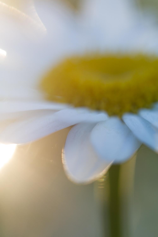 July-Blog-Macro-Photography-Flowers-Ann-Arbor-Jaymes-Dempsey-11.JPG
