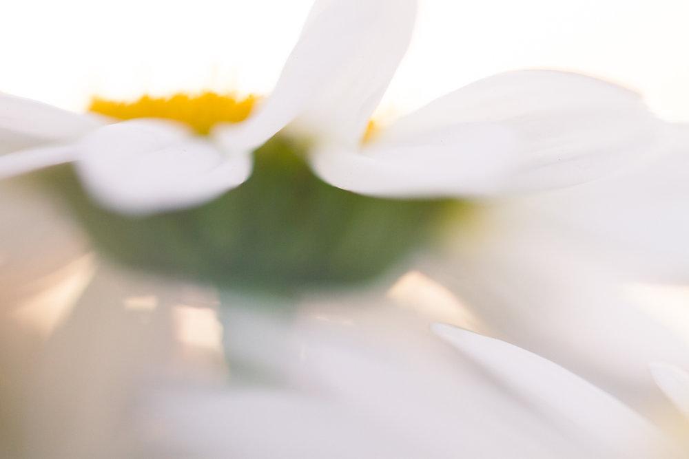 July-Blog-Macro-Photography-Flowers-Ann-Arbor-Jaymes-Dempsey-13.JPG