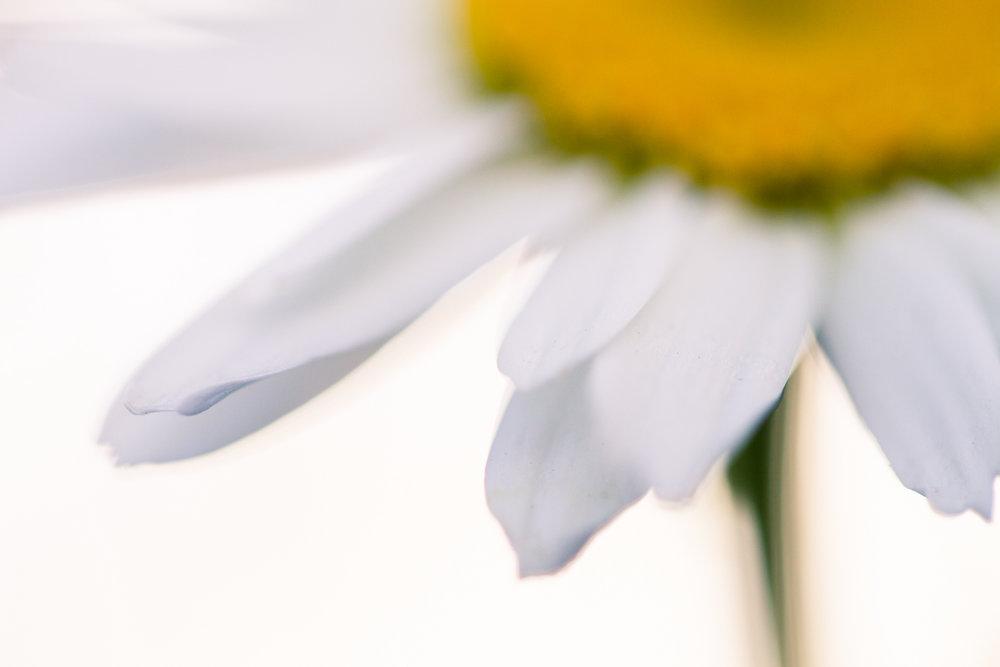 July-Blog-Macro-Photography-Flowers-Ann-Arbor-Jaymes-Dempsey-14.JPG