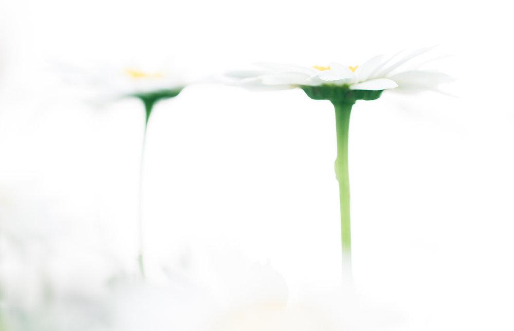 July-Blog-Macro-Photography-Flowers-Ann-Arbor-Jaymes-Dempsey-15.JPG