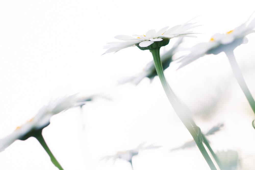 July-Blog-Macro-Photography-Flowers-Ann-Arbor-Jaymes-Dempsey-16.JPG
