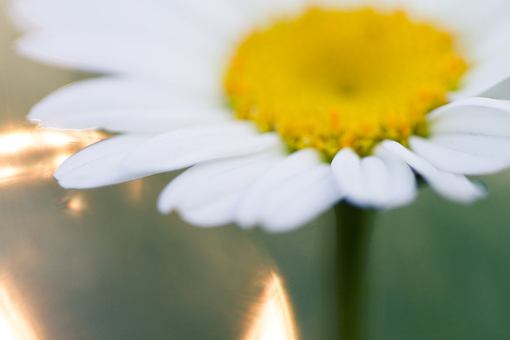 July-Blog-Macro-Photography-Flowers-Ann-Arbor-Jaymes-Dempsey-18.JPG