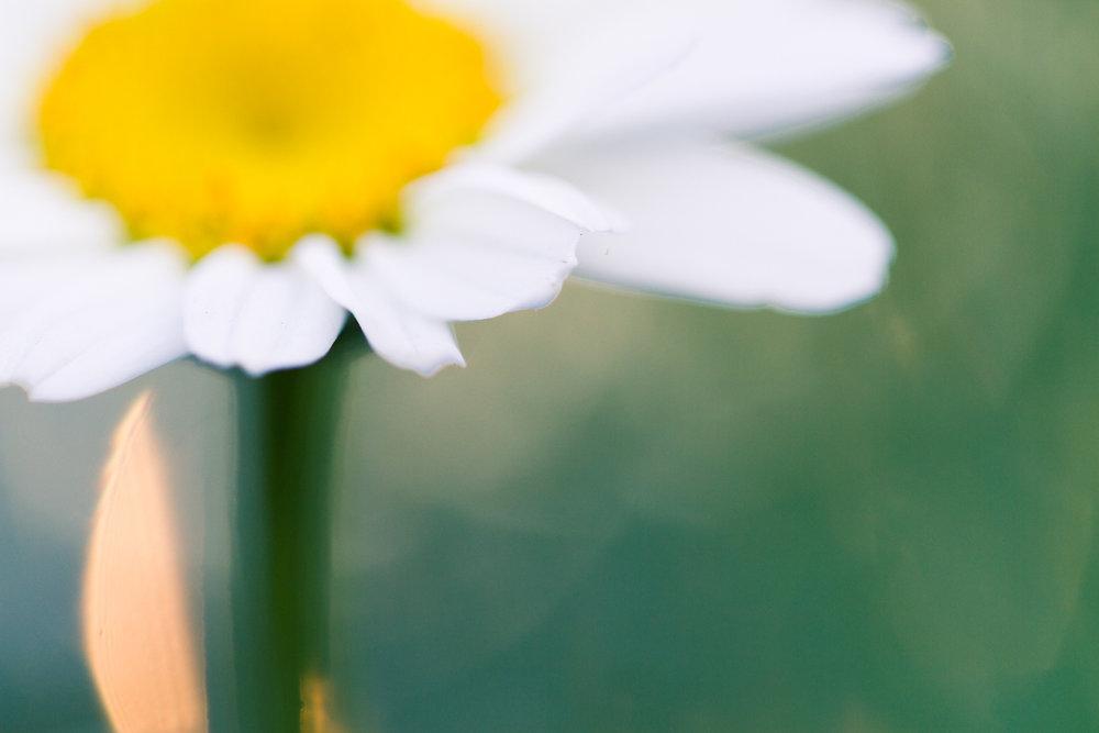 July-Blog-Macro-Photography-Flowers-Ann-Arbor-Jaymes-Dempsey-19.JPG