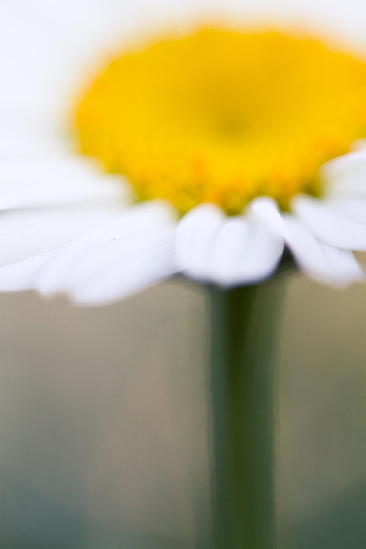 July-Blog-Macro-Photography-Flowers-Ann-Arbor-Jaymes-Dempsey-20.JPG