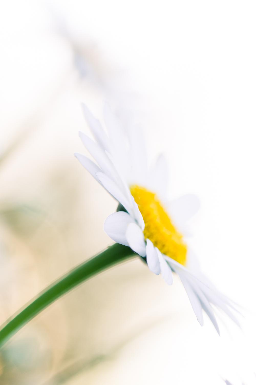 July-Blog-Macro-Photography-Flowers-Ann-Arbor-Jaymes-Dempsey-22.JPG