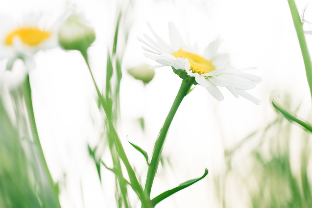 July-Blog-Macro-Photography-Flowers-Ann-Arbor-Jaymes-Dempsey-23.JPG