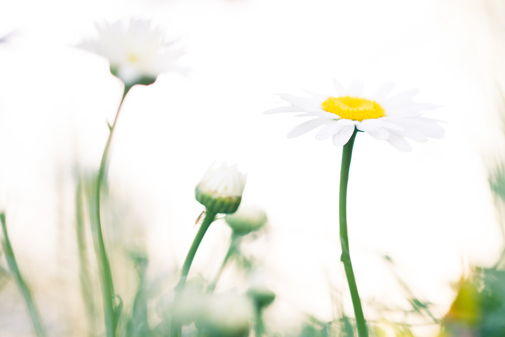 July-Blog-Macro-Photography-Flowers-Ann-Arbor-Jaymes-Dempsey-24.JPG