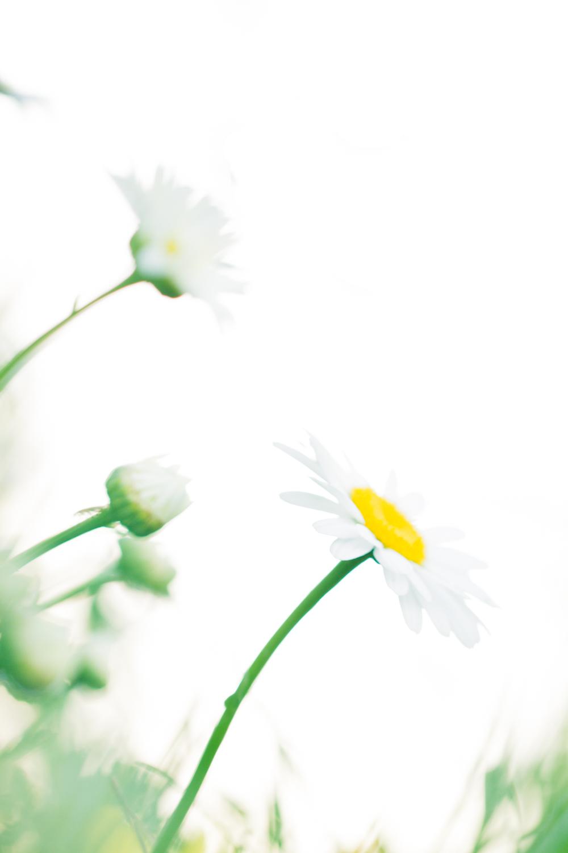 July-Blog-Macro-Photography-Flowers-Ann-Arbor-Jaymes-Dempsey-25.JPG