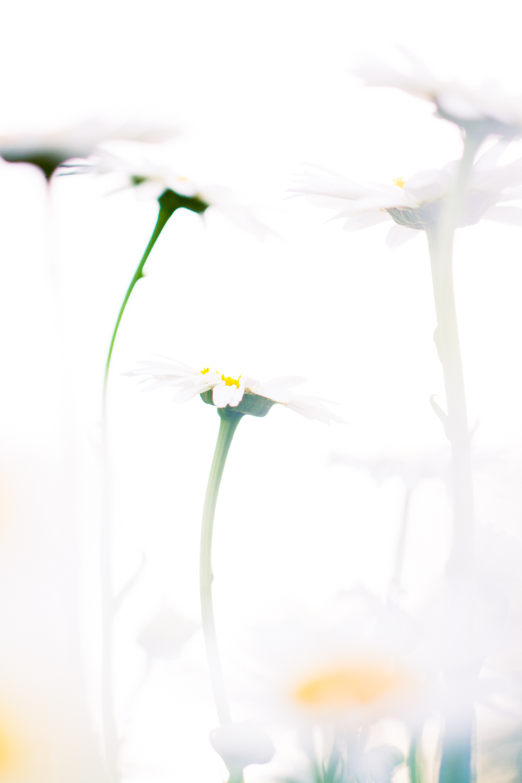 July-Blog-Macro-Photography-Flowers-Ann-Arbor-Jaymes-Dempsey-27.JPG