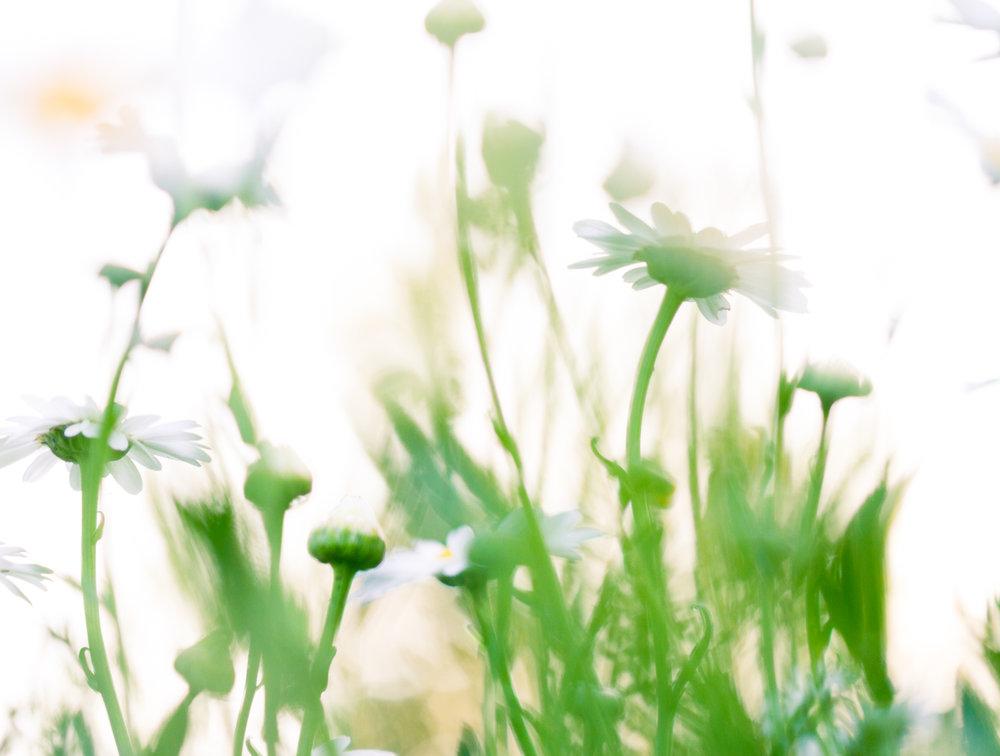 July-Blog-Macro-Photography-Flowers-Ann-Arbor-Jaymes-Dempsey-26.JPG