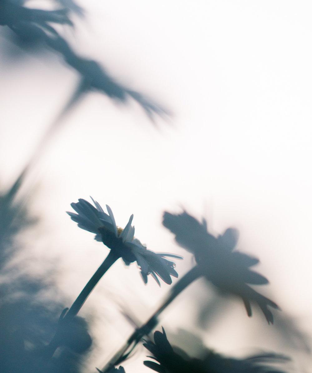 July-Blog-Macro-Photography-Flowers-Ann-Arbor-Jaymes-Dempsey-28.JPG
