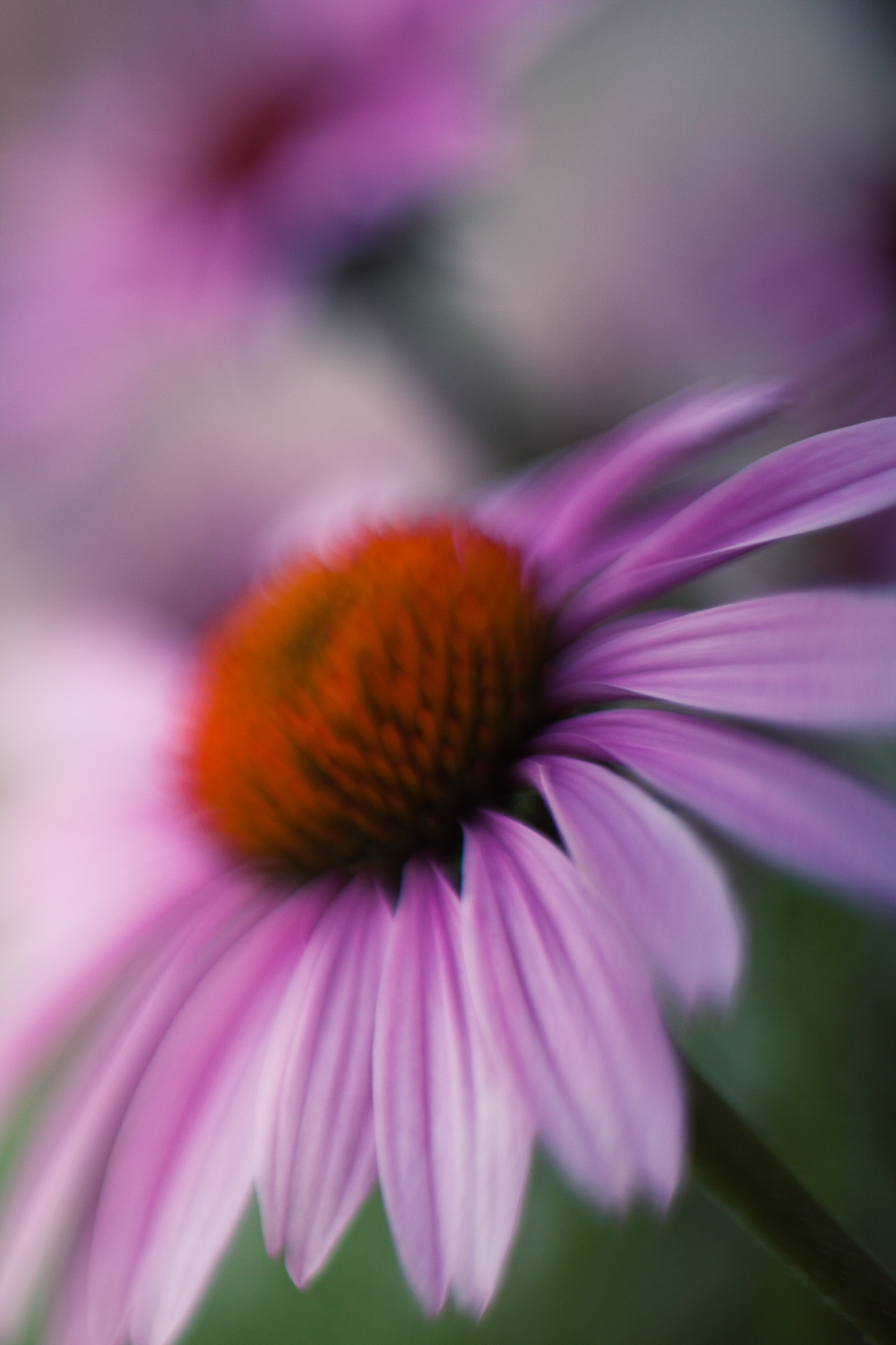 July-Blog-Macro-Photography-Flowers-Ann-Arbor-Jaymes-Dempsey-18.JPG