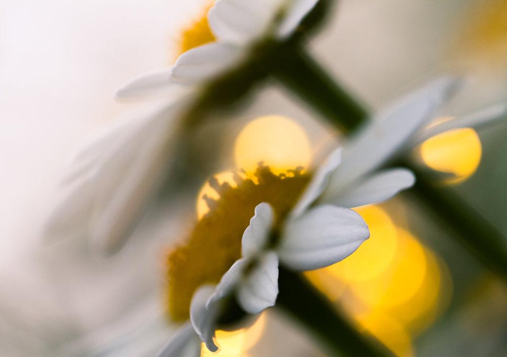 Creative-Macro-Photography-Fairy-Lights-28.JPG