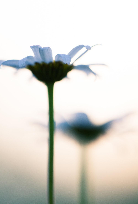 Jaymes-Dempsey-Macro-Photography-Flower-2.JPG