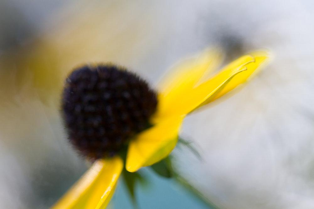 Jaymes-Dempsey-Macro-Photography-Flower-3.JPG