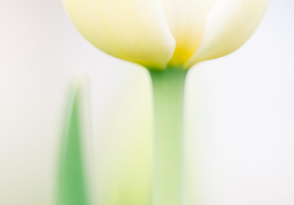Macro-photography-flower-Jaymes-Dempsey.jpg