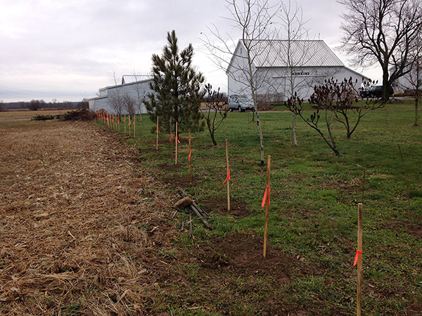 Hedgerow Planting 2014
