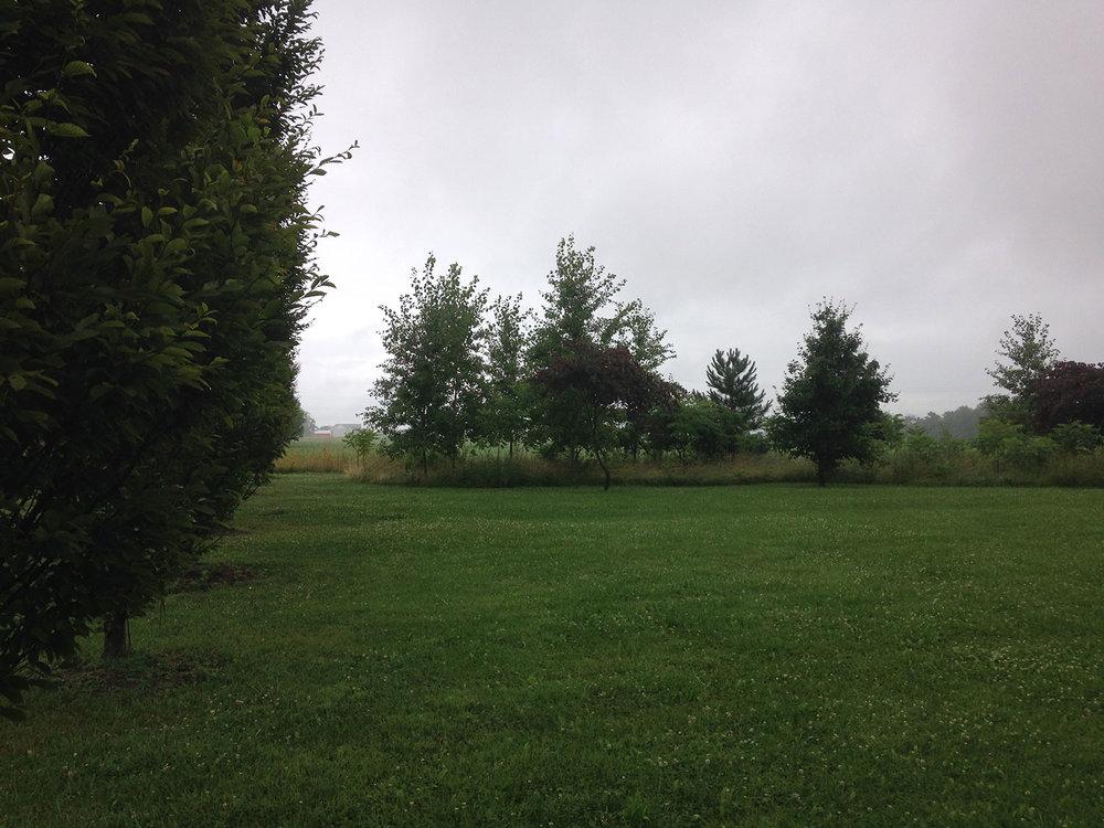 meadow_01.jpg