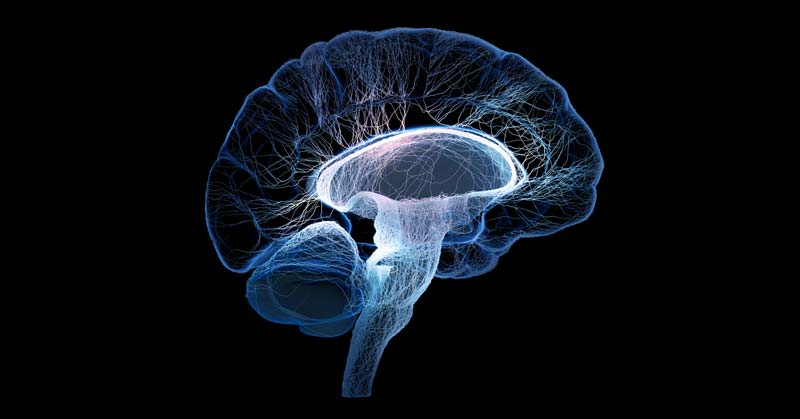 Boosting the Athletic Brain - From Nerve Cells to the Grey Matter - September 16, 2017