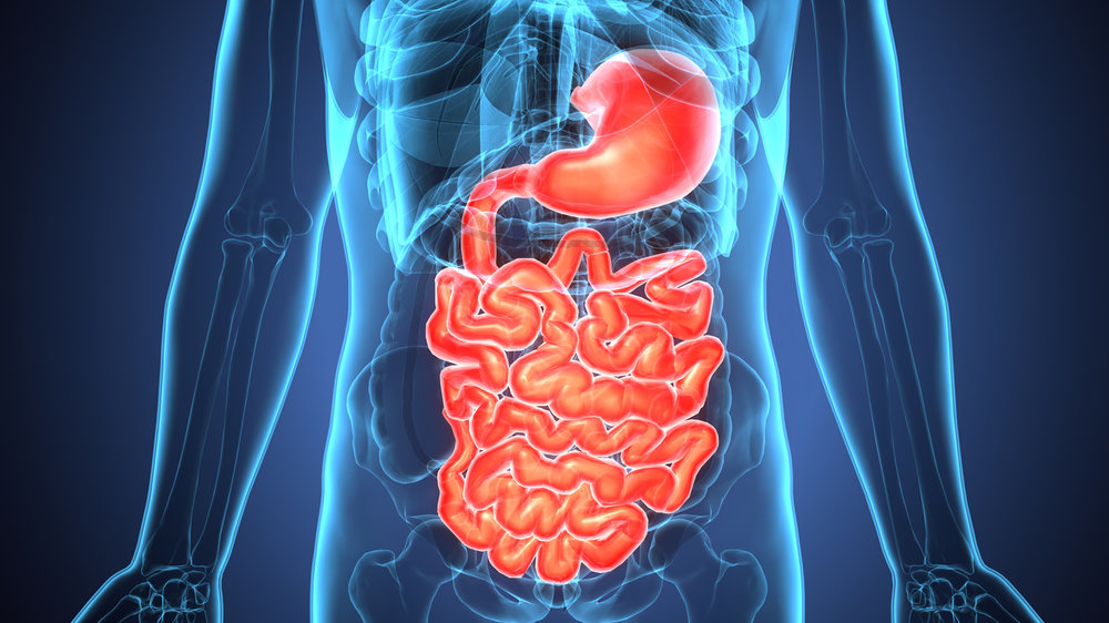 Gut Health - Evaluate the Strength of Your Gut Lining