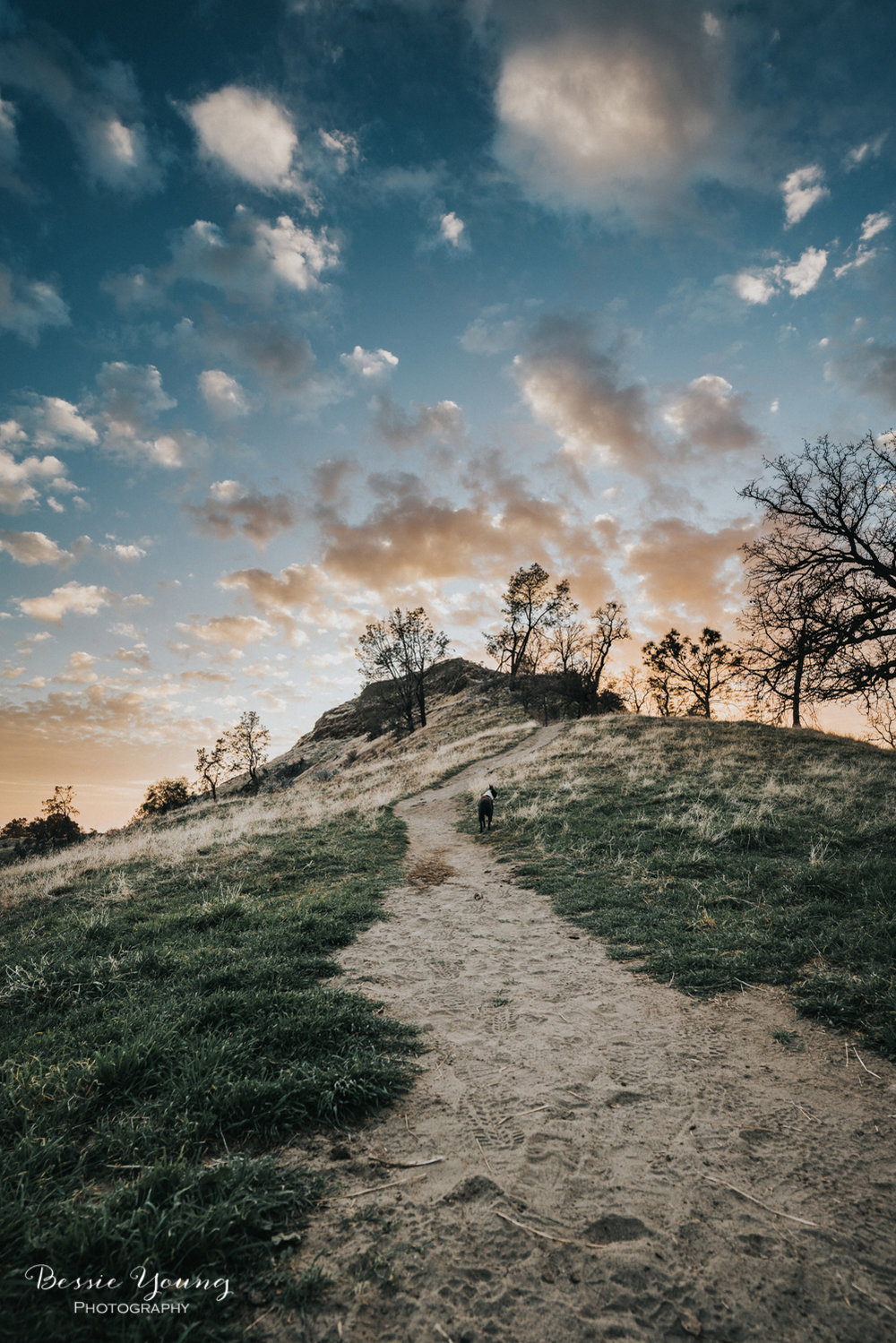 Pincushion Trail Fresno - Testing the Sony A7riii and Batis Lens - Landscape Photography - Bessie Young Photography
