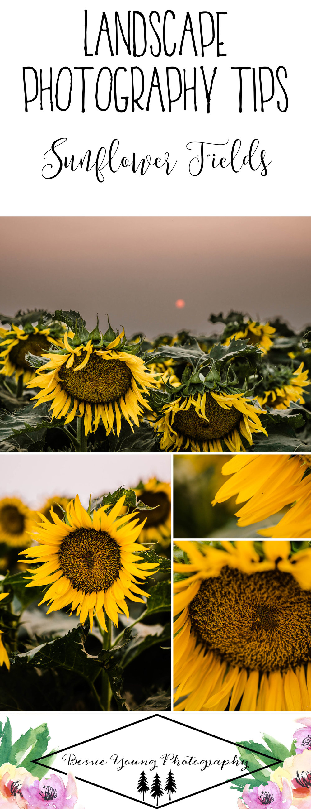 Landscape Photography Tips and Tricks - Sunflower Fields in Sacramento by Bessie Young Photography