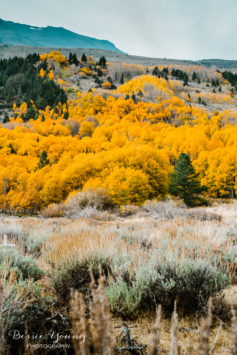 Fall Landscape Photography June Lake California by Bessie Young 1.jpg