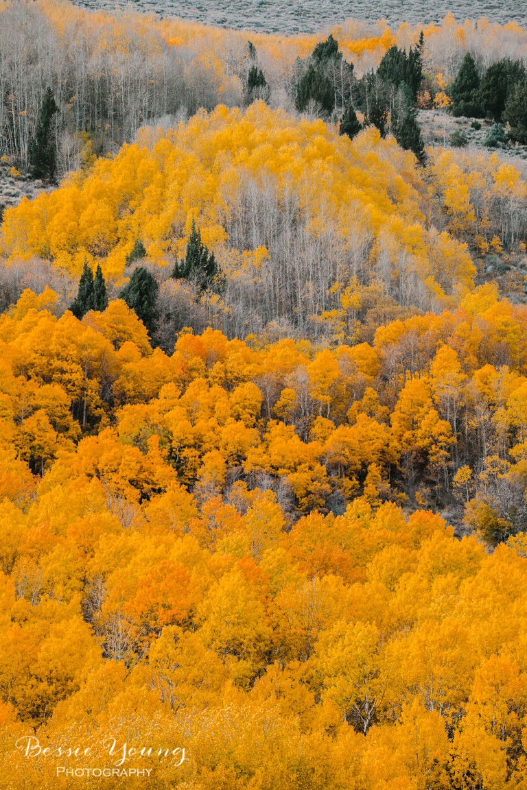 Fall Landscape Photography June Lake California by Bessie Young 8.jpg