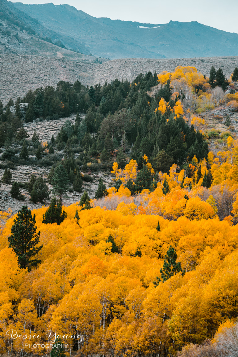 Fall Landscape Photography June Lake California by Bessie Young 9.jpg