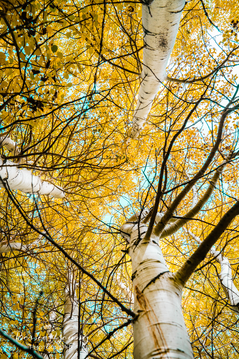 Fall Landscape Photography June Lake California by Bessie Young 11.jpg