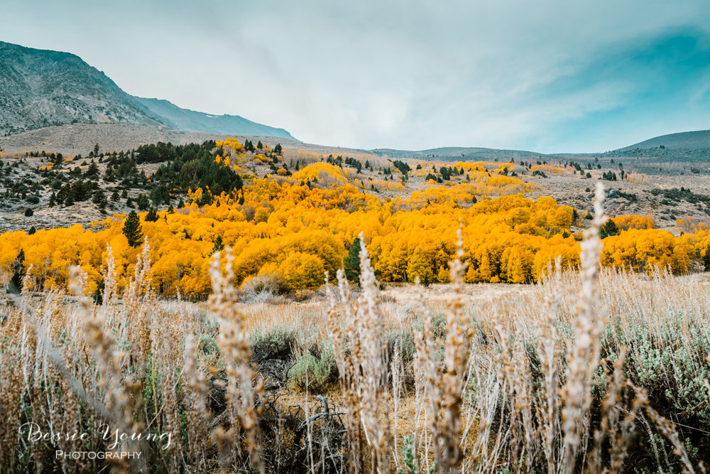 Fall Landscape Photography June Lake California by Bessie Young 3.jpg