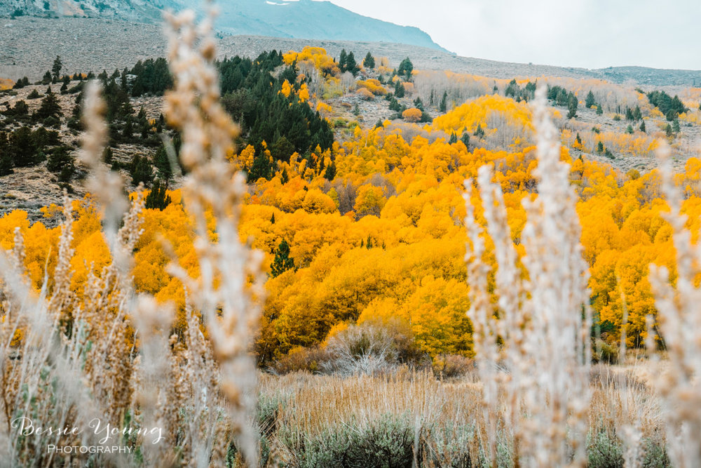 Fall Landscape Photography June Lake California by Bessie Young 4.jpg