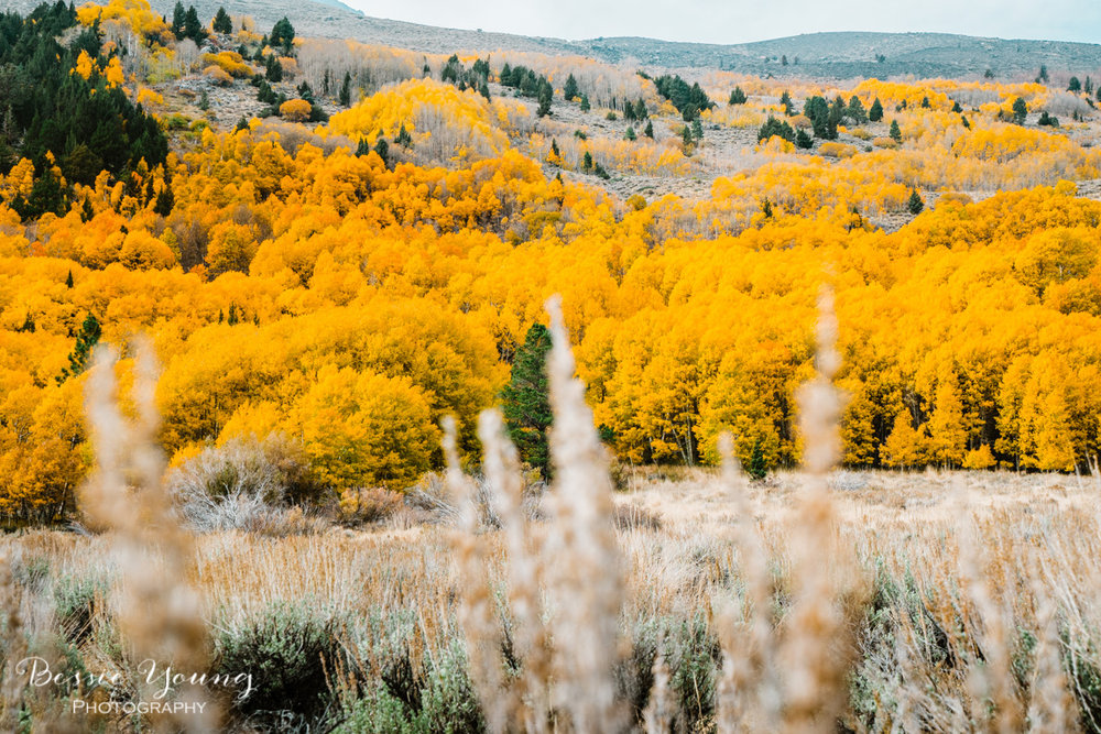 Fall Landscape Photography June Lake California by Bessie Young 2.jpg