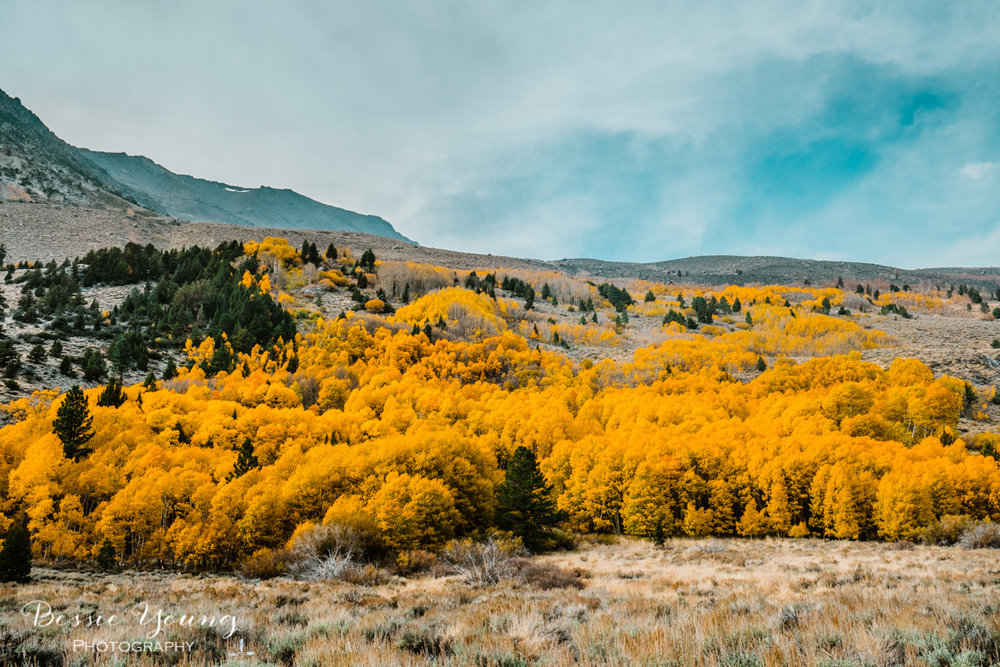 Fall Landscape Photography June Lake California by Bessie Young 5.jpg