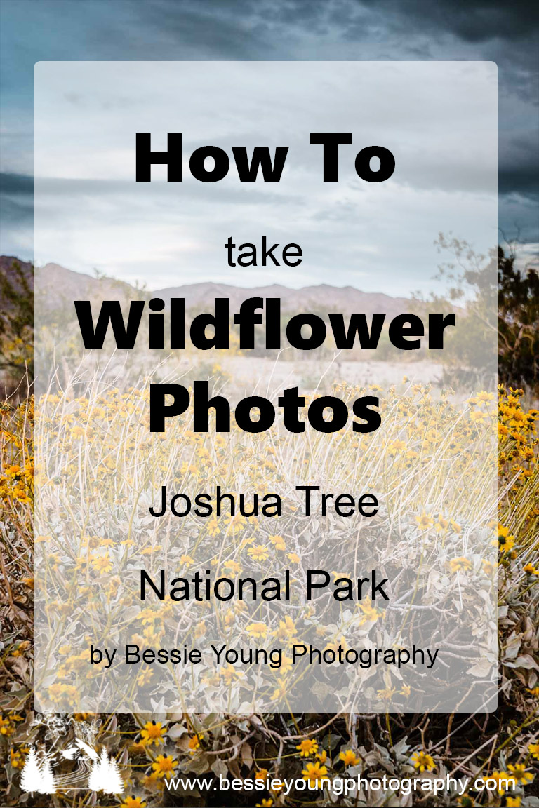 How To Take Flower Photos by Bessie Young - Joshua Tree National Park Wildflowers Landscape Photography Fine Art.jpg