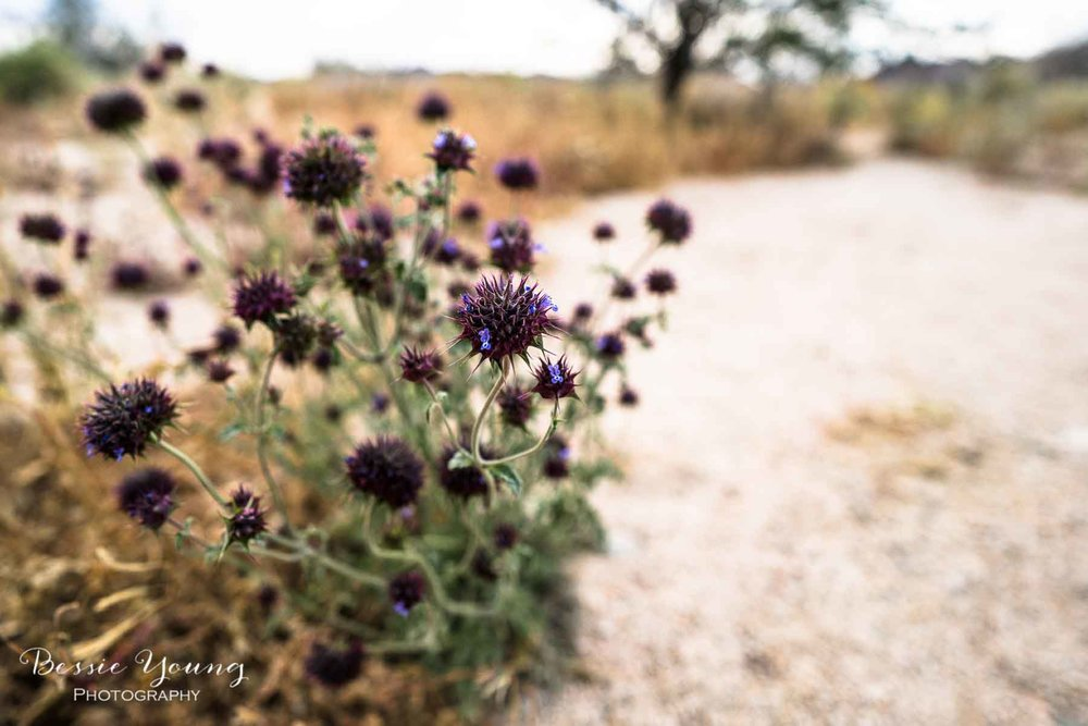 How to Photograph Flowers - Joshua Tree National Park Wildflowers 2019 By Bessie Young Photography.jpgHow To Take Flower Photos Joshua Tree National Park Wildflowers by Bessie Young Photography
