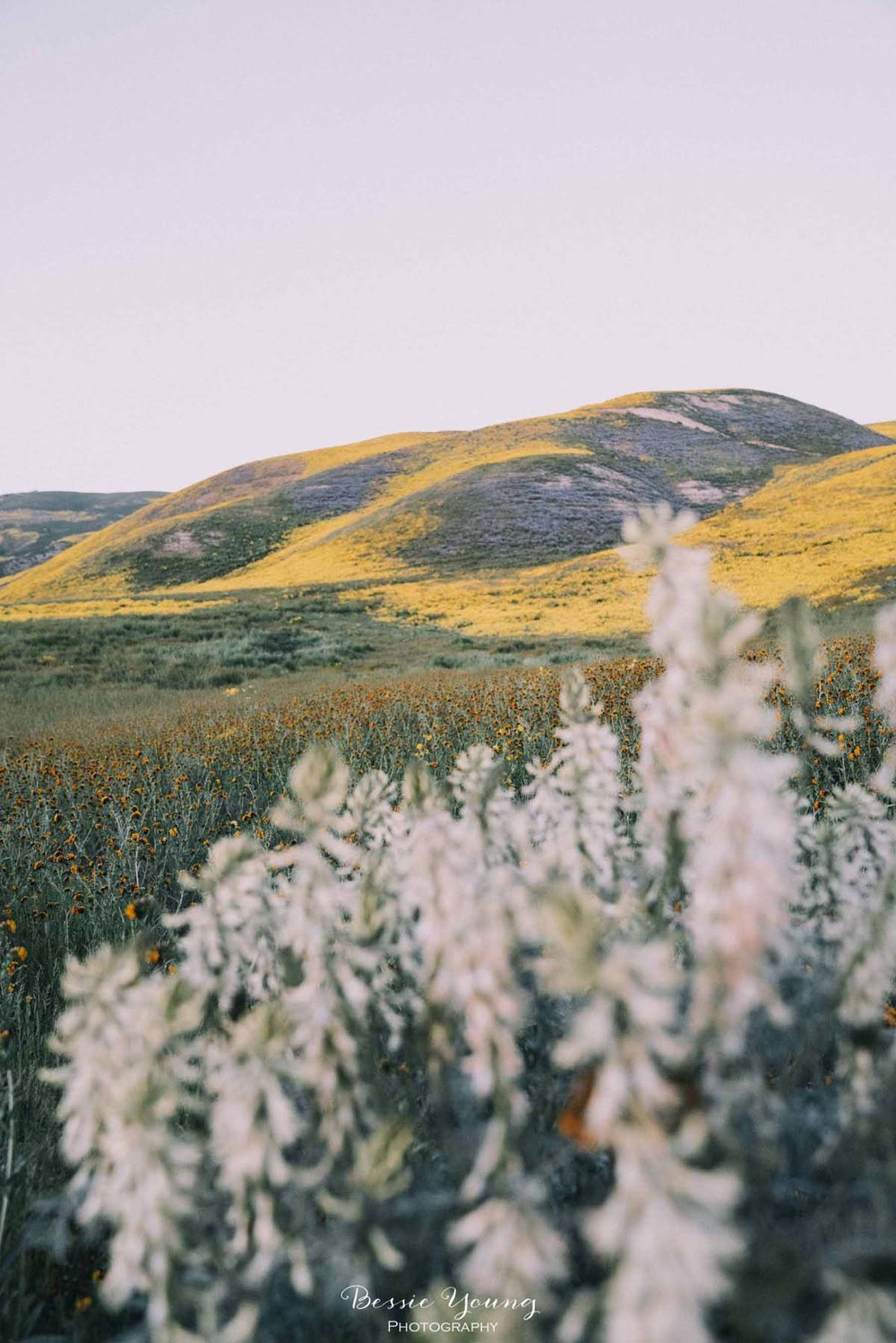Landscape Photography Fine Art - Photo Contest Winner - Carrizo Plains National Monument Superbloom 2019 by Bessie Young Photography