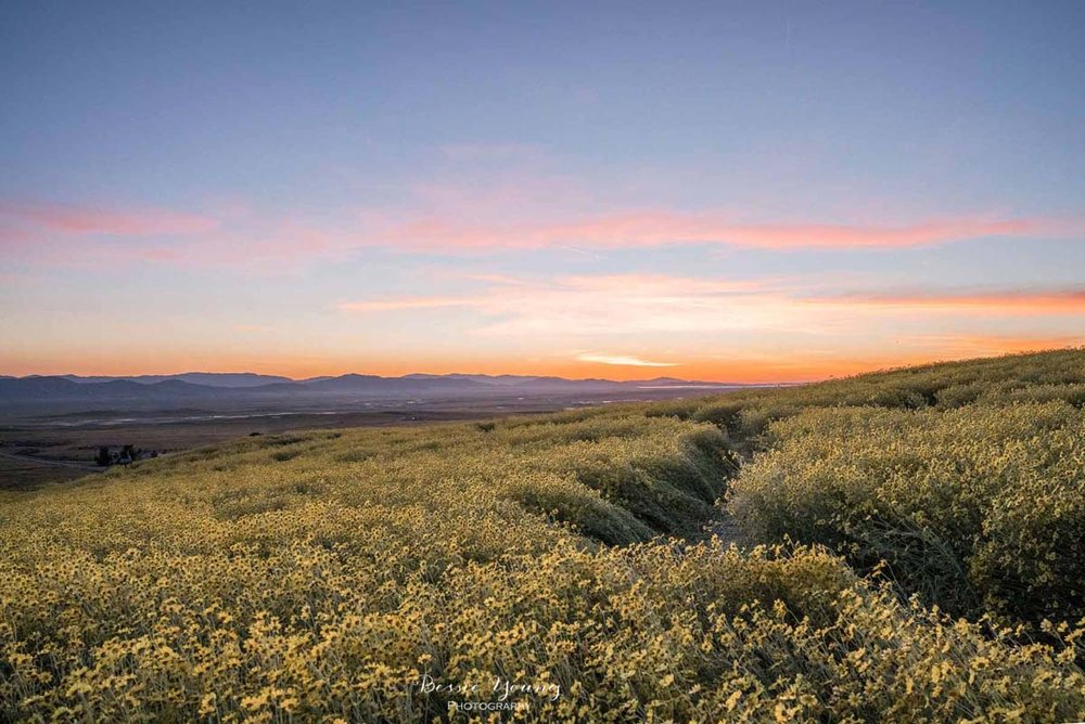Landscape Photography Fine Art - Carrizo Plains National Monument Superbloom 2019 by Bessie Young Photography