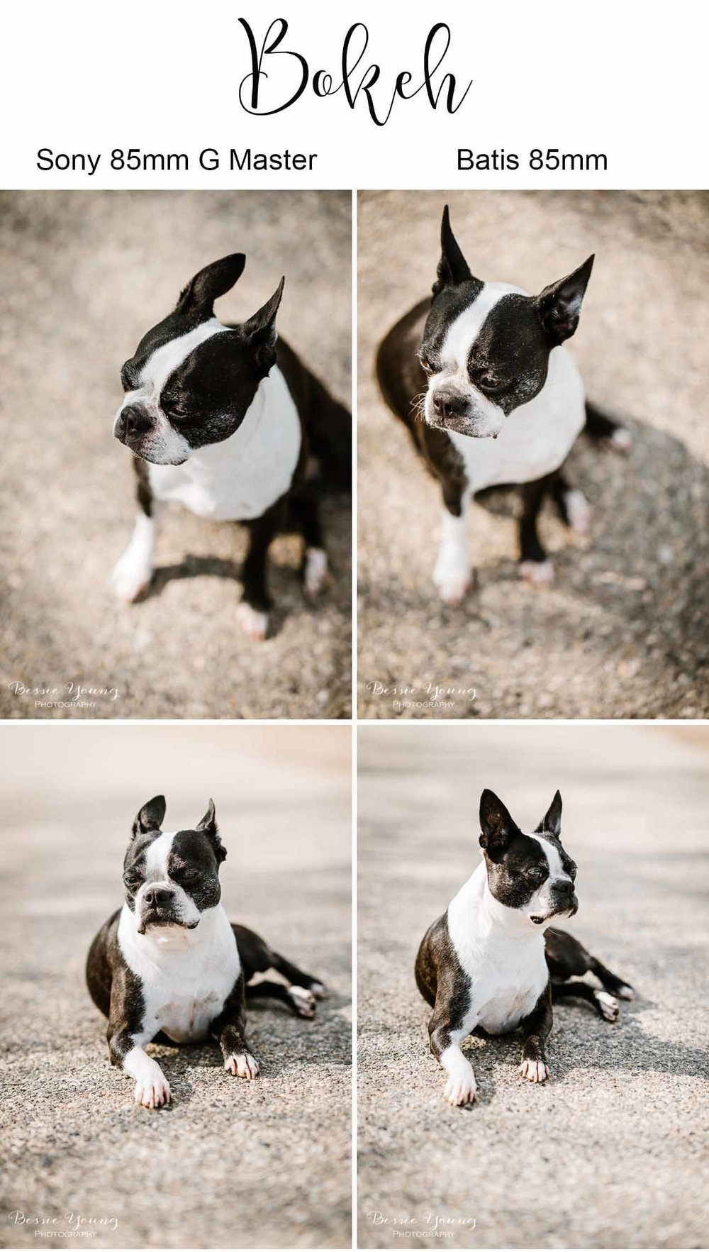 Batis 85mm vs Sony 85mm G master lens comparison by Bessie Young Photography Bokeh Comparison.jpg