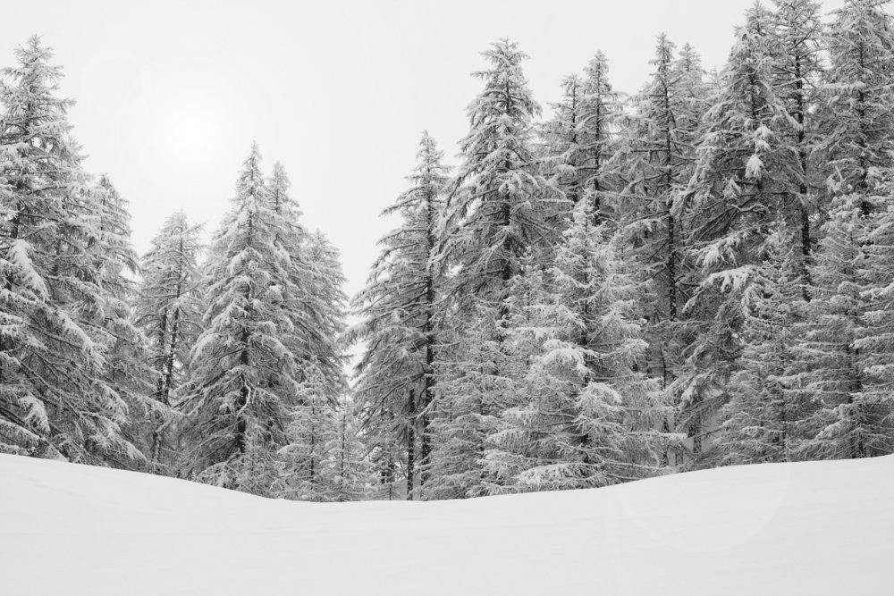 forest-588717_1920.jpg