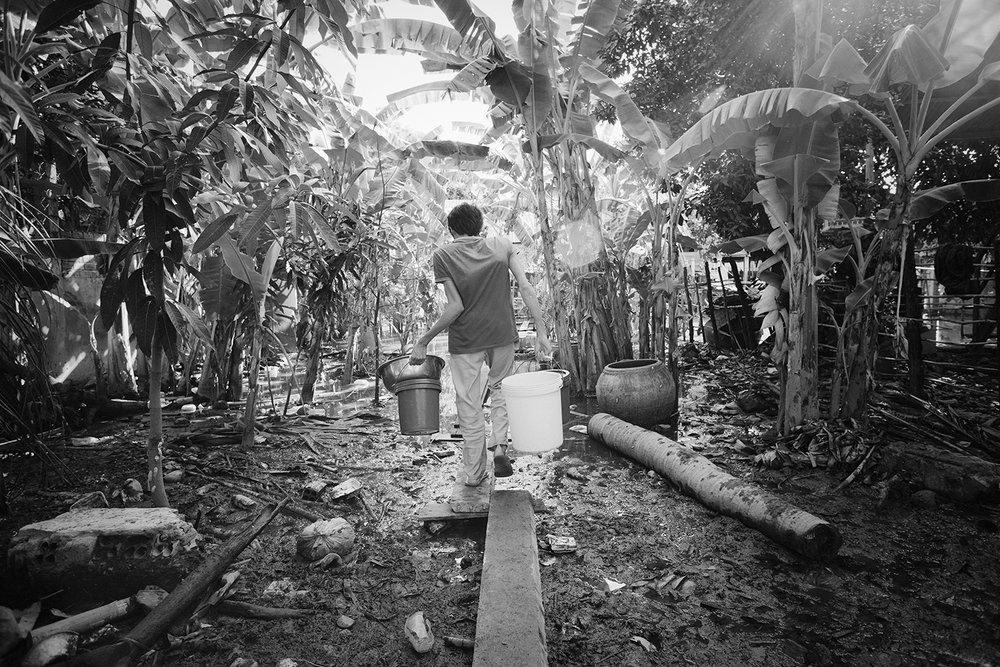 Morning chores. A man walks to his house along a makeshift bridge through a flooded banana grove.