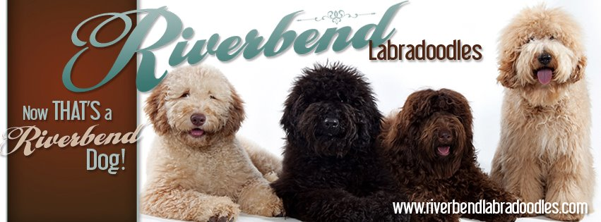 Riverbend Labradoodles -
