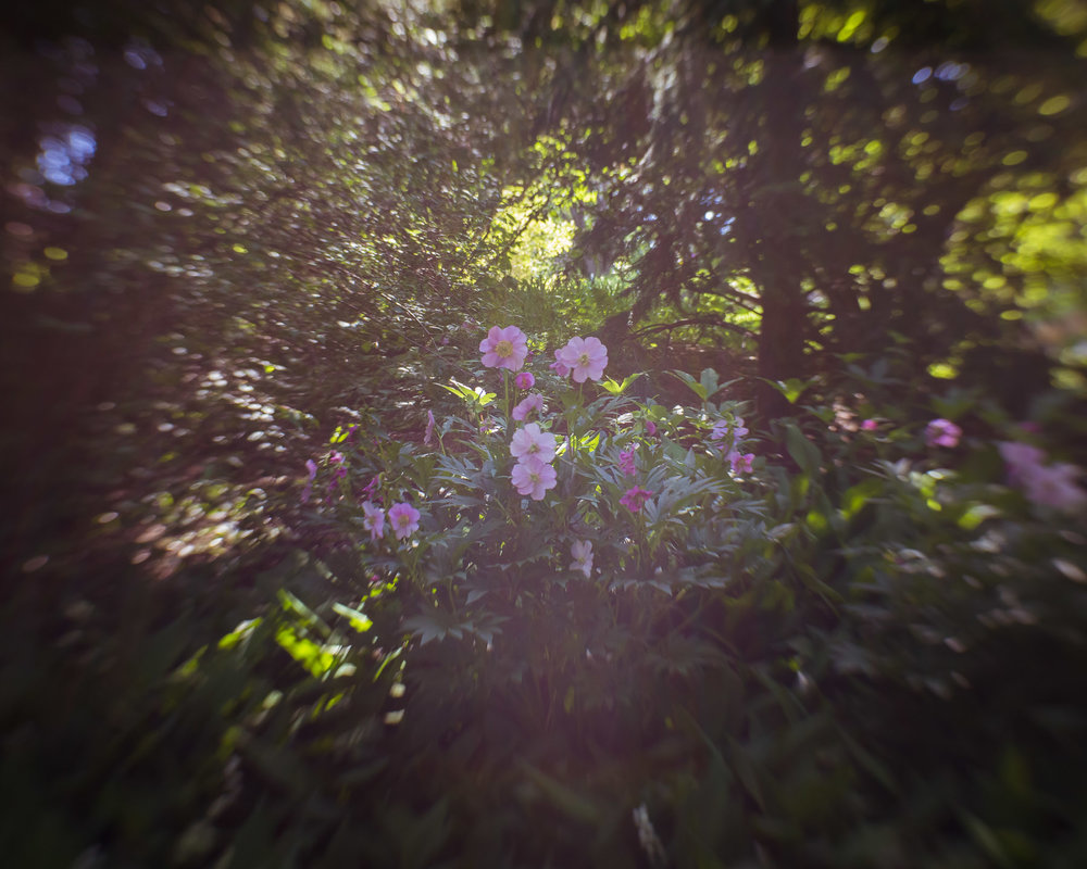 A little bit of light leak on the peonies