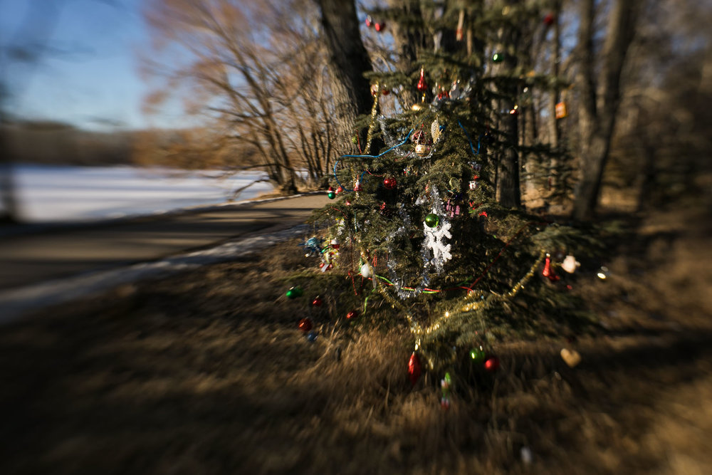 Every Christmas season, someone decorates this little tree at the entrance to the park.