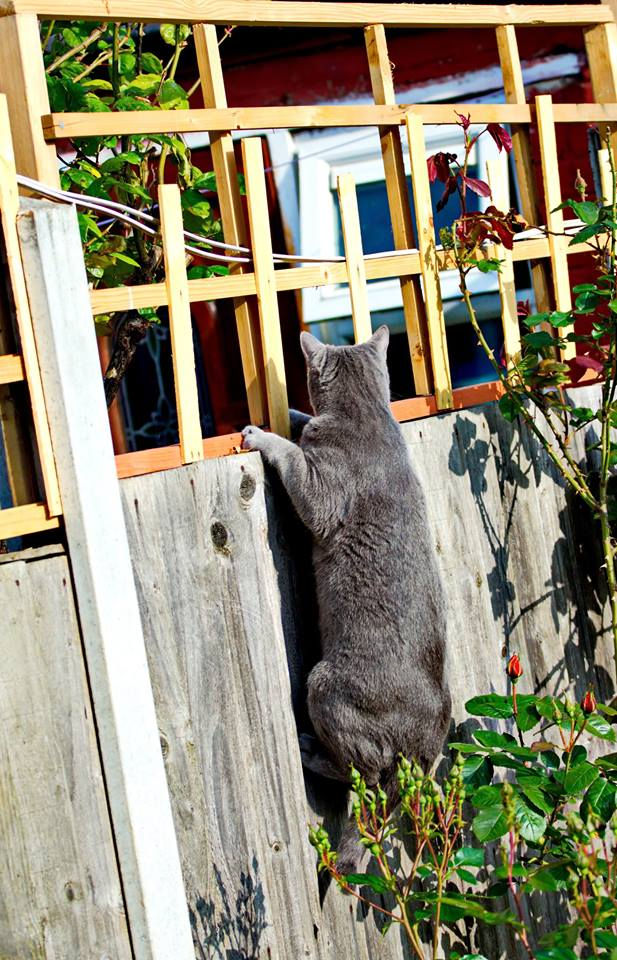 Jessie, checking if the neighbours have any pets she could hang out with. Photo by Bianca's dad.